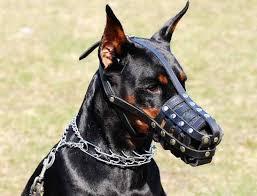 سگ دوبرمن پینچر