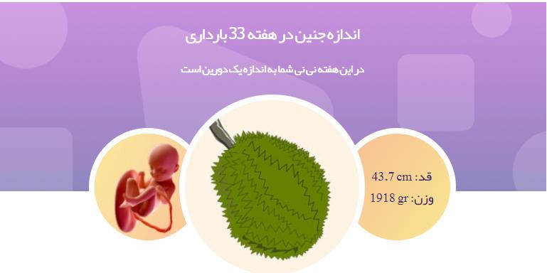 وضعیت جنین در هفته 33 بارداری1