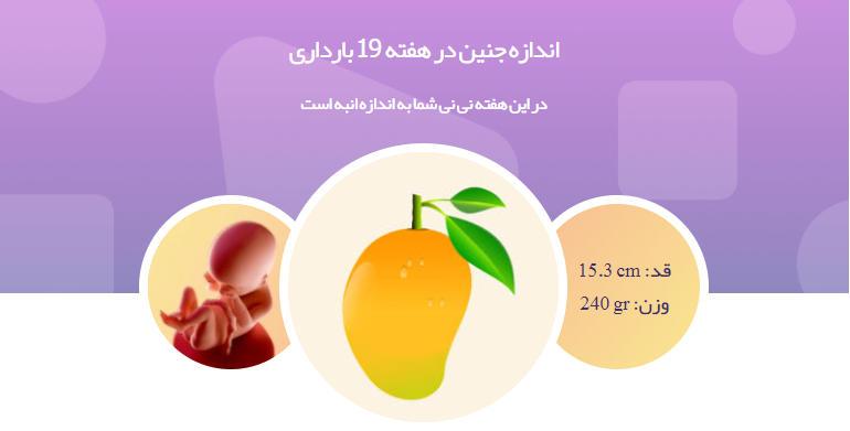 وضعیت جنین در هفته نوزدهم بارداری