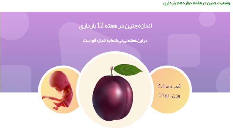 وضعیت جنین در هفته دوزاده بارداری111