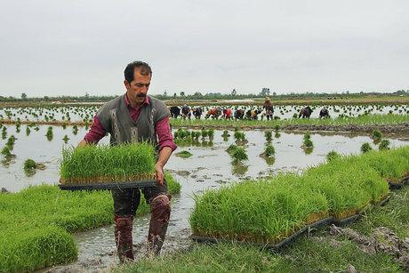 کشاورزی در گیلان
