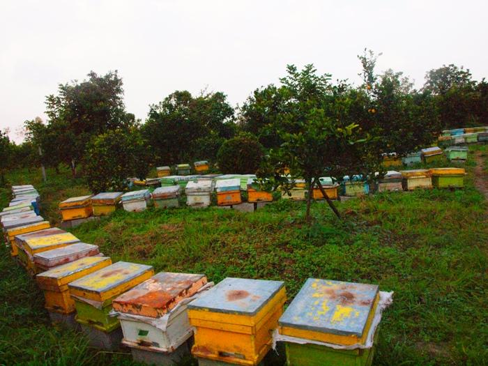 تولید عسل در سیاهکل