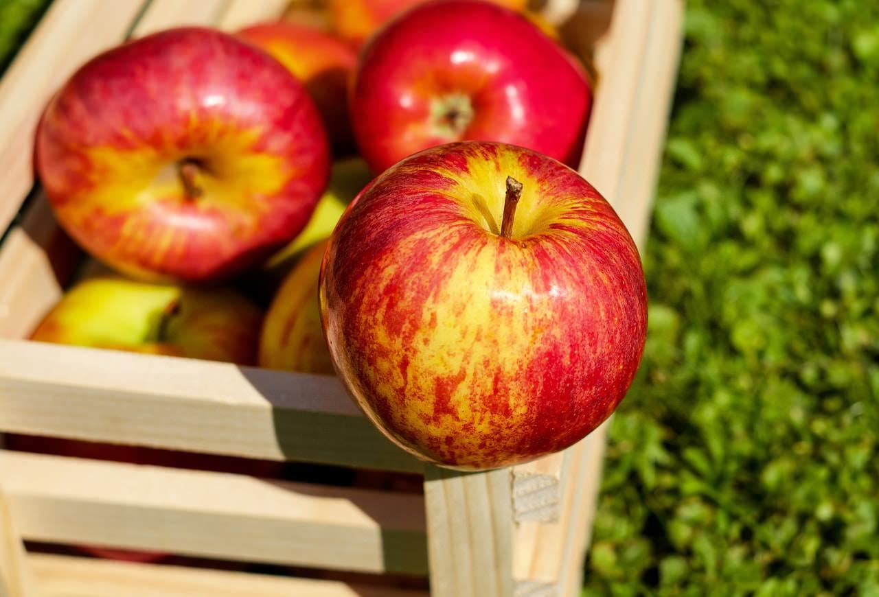 سیب درختی