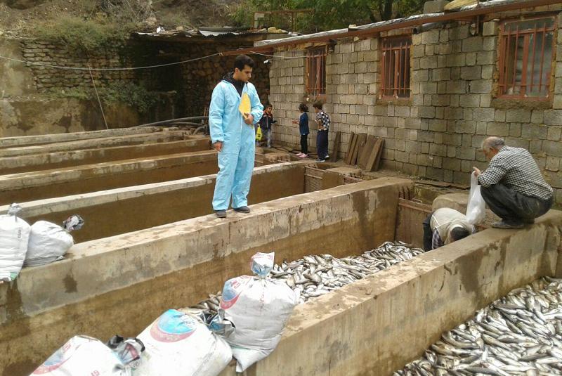خسارت به پرورش ماهی دلفان