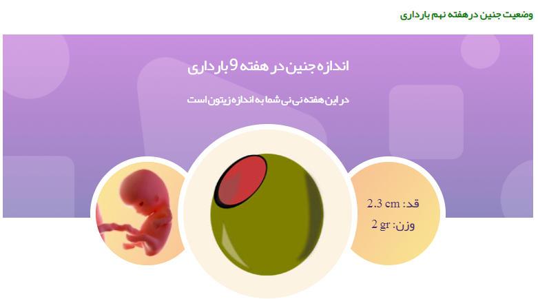 وضعیت جنین در هفته نهم بارداری111