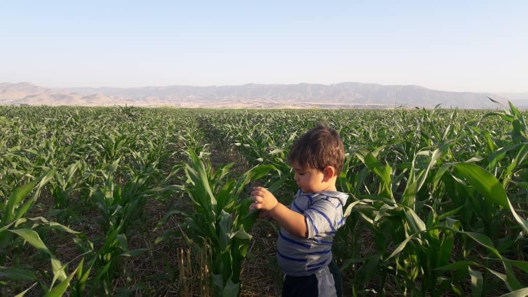 کشاورزی هلیلان