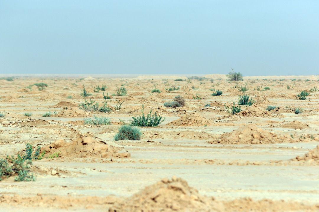 جنگل کاری مهر اقتصاد خوزستان