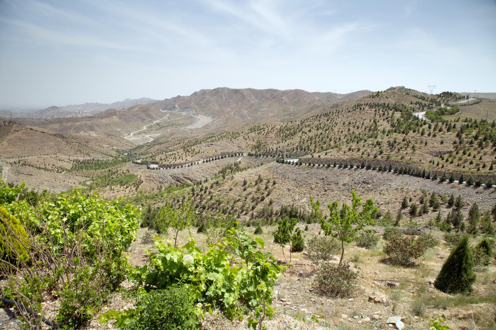 پوشش گیاهی در حریم شهری مشهد
