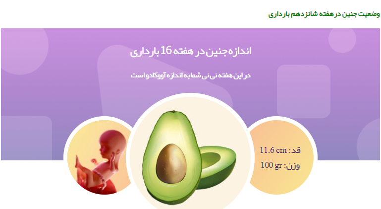 وضعیت جنین در هفته شانزدهم بارداری