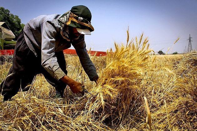 مدیریت بهتر کاشت، داشت و برداشت گندم با سیاست قیمت تضمینی