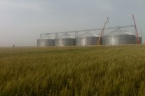 2 کارگر در گندم آلوده گنبدکاووس بازداشت شدند