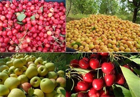 صادرات ۵ میلیارد دلاری محصولات کشاورزی از امسال