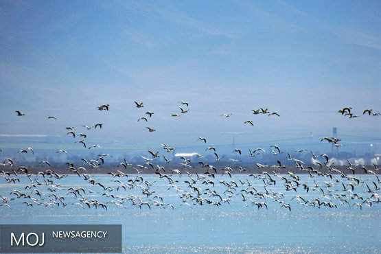 ۴ گونه پرنده در تالاب گندمان چهارمحال و بختیاری شناسایی و ثبت شد
