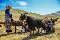 تولید ۱۲ هزار تن گوشت قرمز، توسط عشایر خراسان رضوی