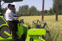 اولین برداشت مکانیزه محصول برنج در شهرستان صومعه سرا انجام شد
