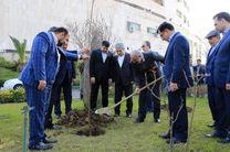 غرس نهال توسط مدیرعامل بانک ملی ایران