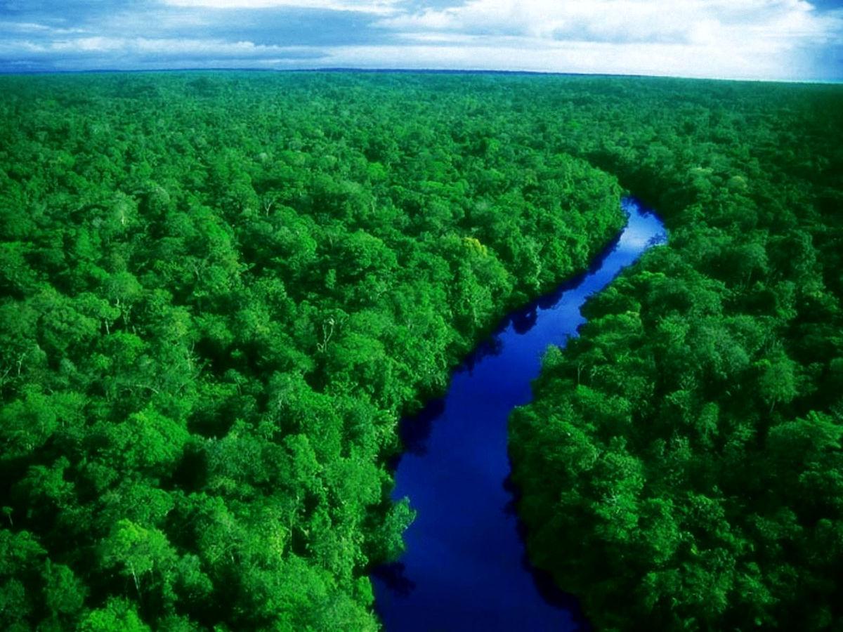 فروش غیرقانونی جنگلهای آمازون از طریق فیسبوک