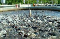ضرورت توسعه بازار مصرف در راستای افزایش یک میلیون تنی تولید آبزیان در کشور