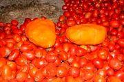 کشف بیش از 70 کیلوگرم تریاک زیر بار گوجه فرنگی / دستگیری یک نفر توسط نیروی انتظامی