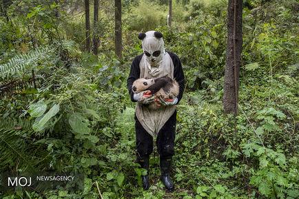 برندگان مسابقات عکاسی طبیعت جهان