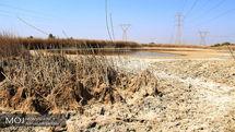 آبیاری نشدن 60 درصد مزارع شادگان به علت خشکسالی