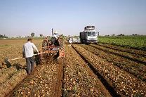 استان همدان دارای رتبه اول تولید سیب زمینی در کشور