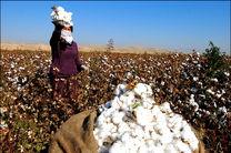 زراعت پنبه باعث ایجاد اشتغال زایی در بخشهای صنعتی می شود