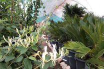 مازندرانی ها چشم انتظار تحول در صنعت گل و گیاه