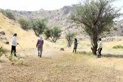 سیریک درگیر مبارزه با ملخهای صحرایی/سمپاشی مزارع سیریک به صورت هوایی و زمینی