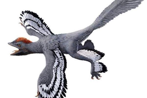 رمزگشایی جدید از فسیل دایناسوری با 4 بال