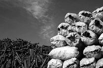 پلمب سه کارگاه غیرمجاز و آلاینده تولید ذغال و دو واحد مرغداری در رودسر