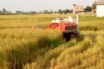 برداشت ۹۰ درصدی برنج در مازندران