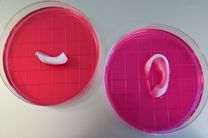جوهر زیستی چاپ بافتهای زنده را امکان پذیر کرد