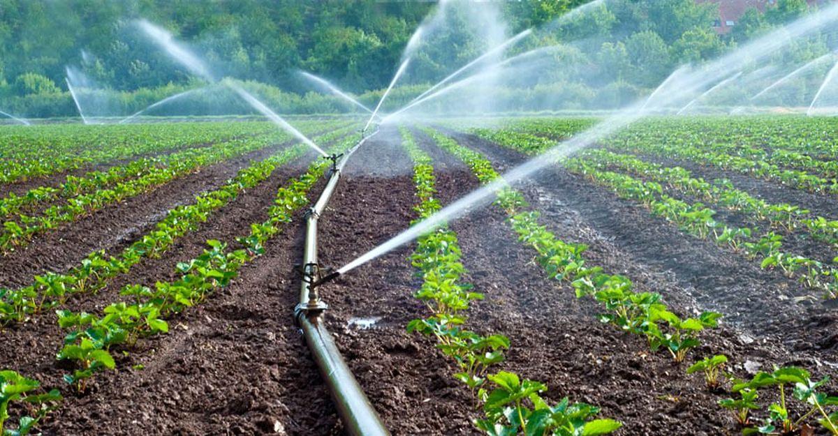 تحت پوشش 70 درصد مزارع سیب زمینی اردبیل به آبیاری نوین