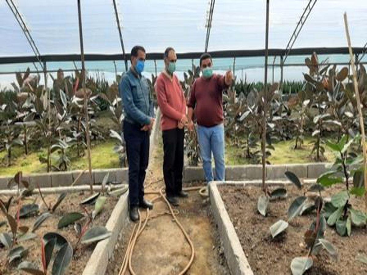بازدید مشاور رئیس جهاد کشاورزی مازندران از گلخانه گل و گیاه زینتی محمودآباد