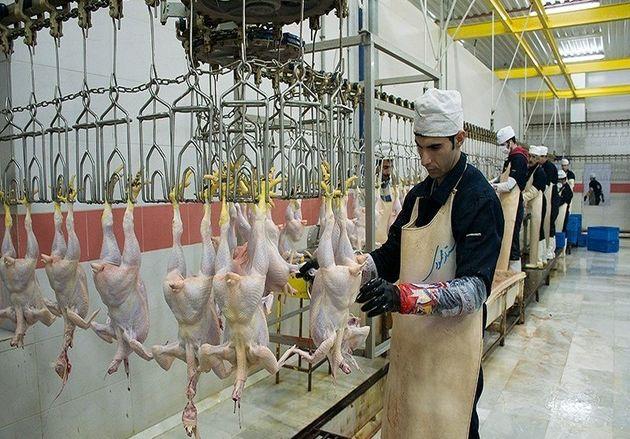 قیمت مرغ در گلستان کاهش مییابد/کمبود مرغ در استان تامین شد
