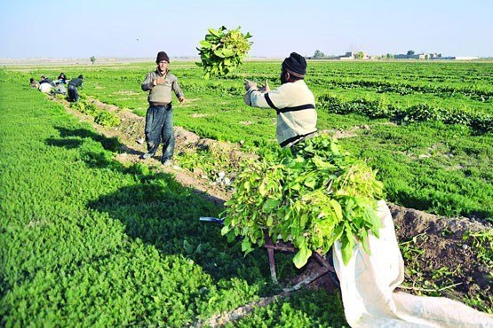 یک میلیارد و 200 میلیون تومان خسارت بخش کشاورزی در فارس