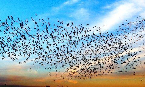 موردی از آنفلوآنزای پرندگان در هرمزگان مشاهده نشده است