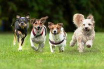 سگ ها به کمک بیماران دیابتی می آیند