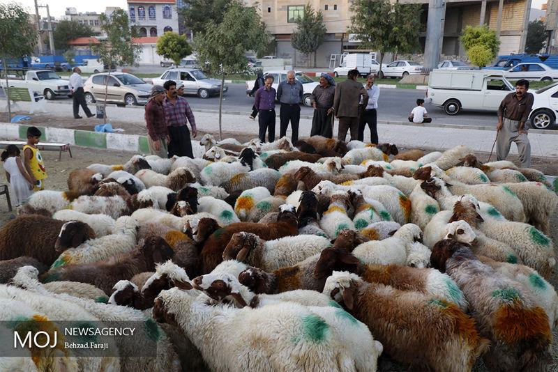 فعالیت مراکز سه گانه عرضه دام بهداشتی تا روز تاسوعا