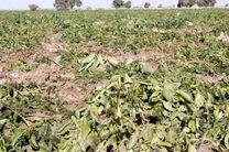 اقدامات لازم در خصوص جلوگیری از سرمازدگی محصولات کشاورزی صورت پذیرد