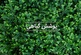 کاشت نهال های سازگار با اقلیم، توسعه 500 هکتاری جنگلها و کاشت نهال در ملایر