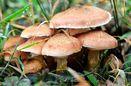 چیدن و خوردن قارچ های موجود در طبیعت اقدام خطرناکی است