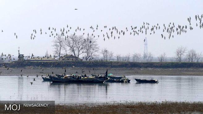 چرا کره شمالی بهشت پرندگان مهاجر است