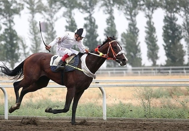 ویرایش ژن برای تولید اسب هایی با توانایی ورزشی بالاتر