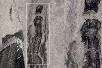 فسیل ۵۰۰میلیون ساله کشف شد