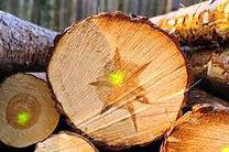 عامل سابقهدار تخریب جنگلهای لرستان دستگیر شد