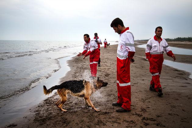 اعزام سگهای تجسس زندهیاب برای یافتن مفقودان در بندر دیر