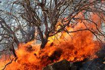 آتش سوزی جنگل های مریوان با حضور کارکنان تیپ ۳۲۸ مهار شد