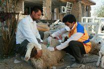 پرداخت خسارت 600 هزار تومانی و 3 میلیون تومانی برای دامهای سبک و سنگین مناطق زلزله زده